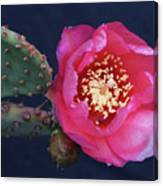 Prickly Pear Bloom Canvas Print