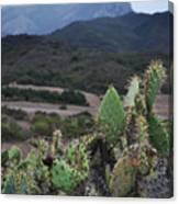 Prickly Pear Cacti Rancho Sierra Vista Satwiwa Mountains Canvas Print