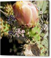Prickly Pear Flower 4 Canvas Print
