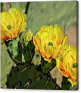 Prickly Pear Flowers H42 Canvas Print