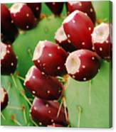 Prickly Pear Fruit Canvas Print