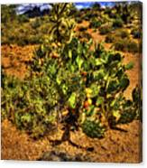 Prickly Pear In Bloom With Brittlebush And Cholla For Company Canvas Print