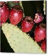 Prickly Pear-jerome Arizona Canvas Print