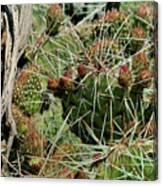 Prickly Pear Revival Canvas Print