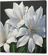 Primavera En Flor Canvas Print
