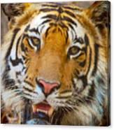 Prime Tiger Canvas Print