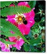 Primrose And Bee Canvas Print