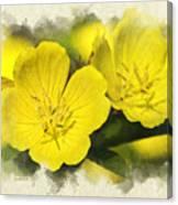 Primrose Flowers Blank Note Card Canvas Print