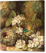 Primroses And Bird's Nests On A Mossy Bank Canvas Print