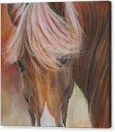 Prince Charming Canvas Print