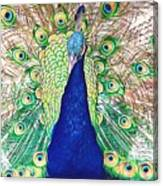 Prince Of The Peacocks Canvas Print