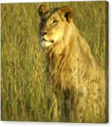 Princely Lion Canvas Print