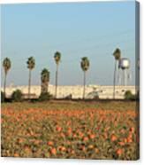 Prison Pumpkin Patch Canvas Print
