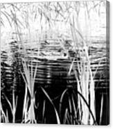 Private Duck Swimming Hole 1 In Black And White Canvas Print