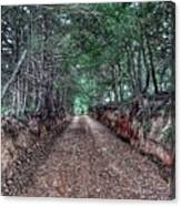 Private Road Canvas Print
