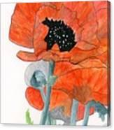 Prize Poppies Canvas Print