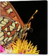 Profile Of A Butterfly Canvas Print