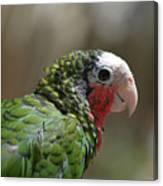 Profile Of A Conure Parrot Up Close Canvas Print