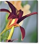 Profile Of A Day Lily Canvas Print