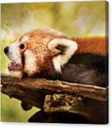 Profile Of A Red Panda Canvas Print