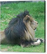 Profile Of A Sleeping Lion In Grass Canvas Print