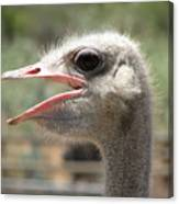 Profile Of An Ostrich Canvas Print