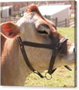 Profile Of Brown Cow Canvas Print