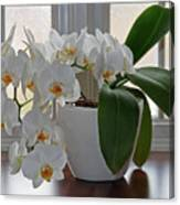 Profusion Of White Orchid Flowers Canvas Print