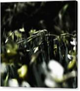 Promises Of Spring. Canvas Print