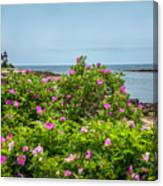 Prospect Harboa Roses Canvas Print