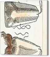 Prosthetic Noses, Ambroise Pare, 1561 Canvas Print