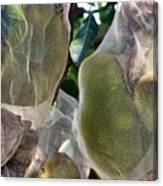 Protect Your Durian Canvas Print