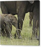Protecting The Little One Canvas Print