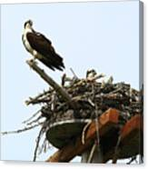 Protecting The Nest Canvas Print