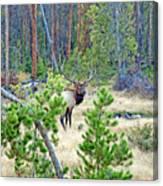 Protective Elk Canvas Print