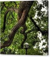 Protective Oak Canvas Print
