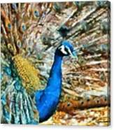 Proud As A Peacock Canvas Print