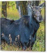 Proud Mama Moose Canvas Print