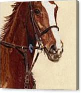 Proud - Portrait Of A Thoroughbred Horse Canvas Print