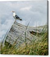 Proud Seagull Canvas Print