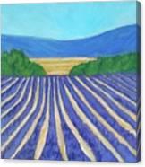 Provence Lavender Field Canvas Print