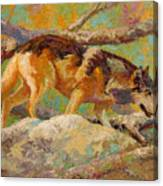 Prowler - Grey Wolf Canvas Print
