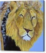 Prowling Lion Canvas Print