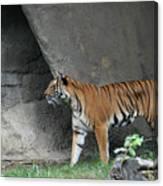 Prowling Tiger Canvas Print