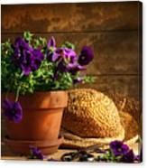Pruning Purple Pansies Canvas Print