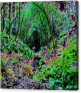 Psychedelic Fern Gully On Mt Tamalpais Canvas Print