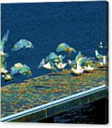Psychedelic Gulls Canvas Print