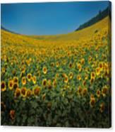 Psychodelic Sunflowers Canvas Print
