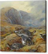 Ptarmigan Danger Aloft By Thorburn Canvas Print