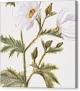 Pua Kala Flower Canvas Print